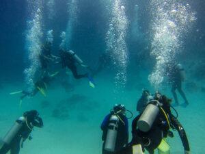 Scuba Dive in The Gulf of Mexico