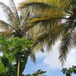 Palm trees of Destin, FL