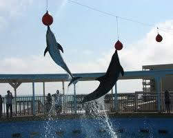 DolphinsGulfarium
